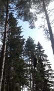 Helgya-Klatrepark-4